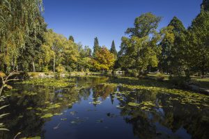 Queenstown_gardens-1